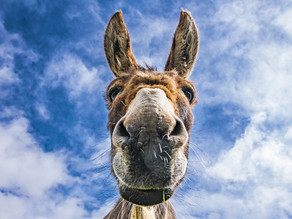 """Perhaps God is Speaking Through Your """"Donkey"""""""