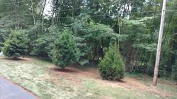 G&C Landscaping