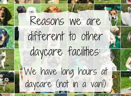 Reason 2:   We have long hours at daycare (not in a van!)