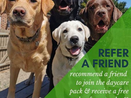 Refer A Friend & Gain a Free Daycare Day!