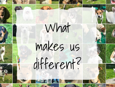 What makes us so different?