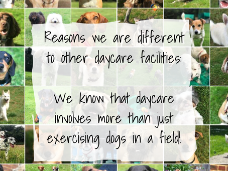 Reason 3:  We know that daycare involves more than just exercising dogs in a field!