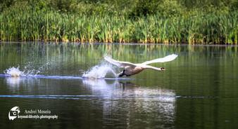 Wildlife-1-24.jpg