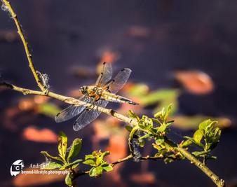 Wildlife-1-14.jpg