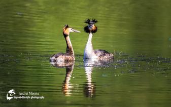 Wildlife-1-4.jpg