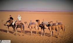 marrocco 6