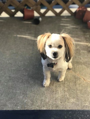 Presley got a haircut 💕💕.jpg