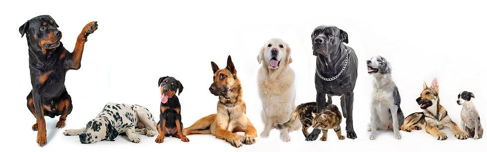 shutterstock_52838653-pets in a row.jpg