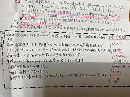 ピンク・イエローラブ.jpg