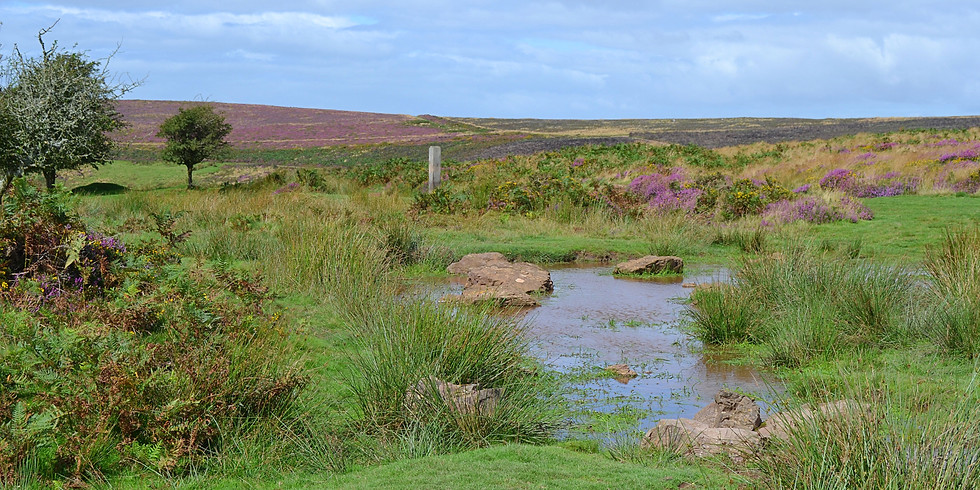 Quantock Hills | Thorncombe Hill and Holford Combe Circular