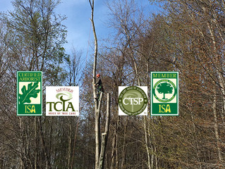 What the jargon means: Tree service certifications