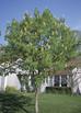 5 more great Ohio tree species