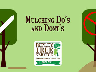 It's mulching season - here's how the pros do it