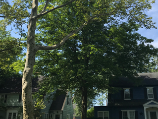 Trees to shade your yard