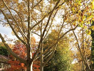 5 great Ohio trees