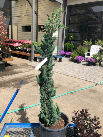 Personal Plant Shopper 2