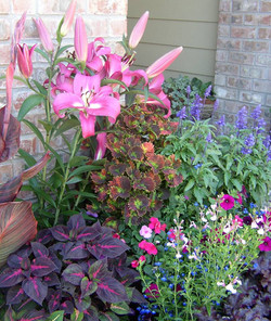 Lilies & Coleus Containers