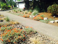 Drought Tolerant Front & Strip
