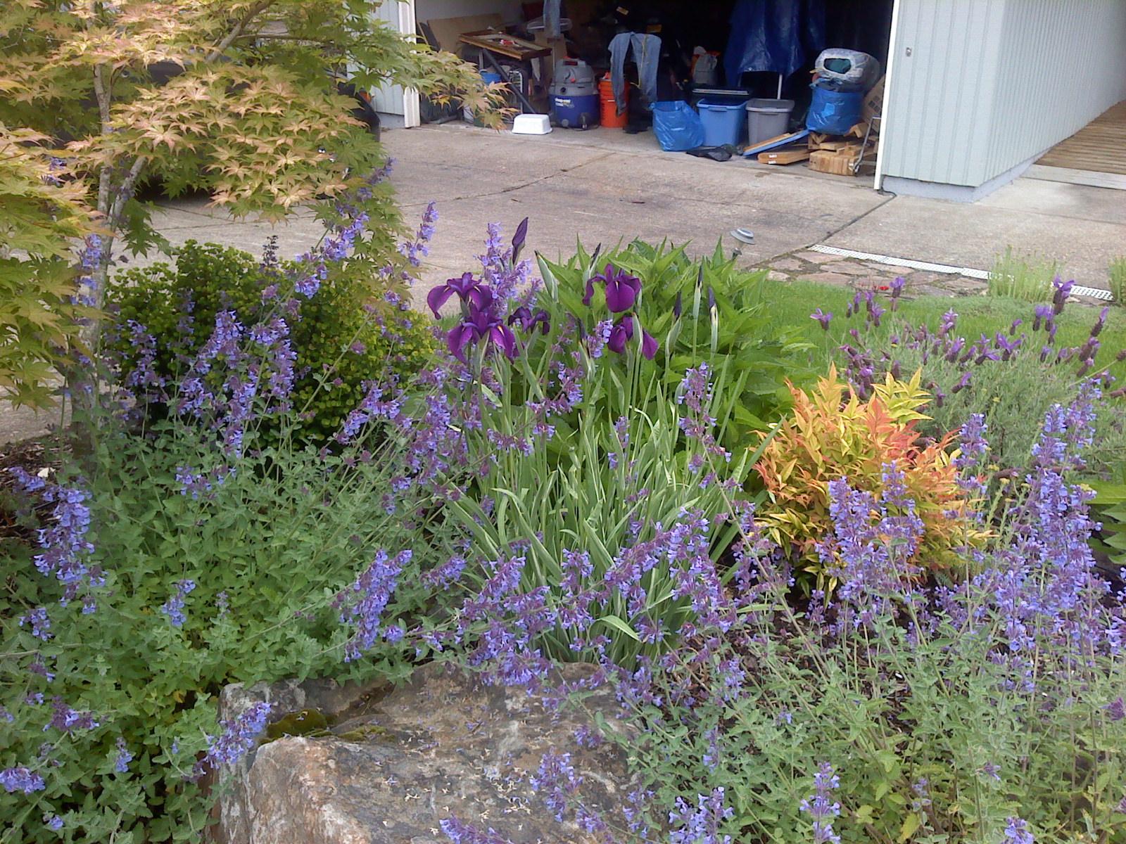 Front Yard Perennial Garden