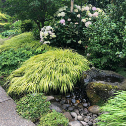 Japanese Forest grass w/fountain