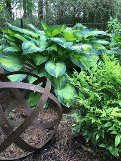 Garden Art & Hosta