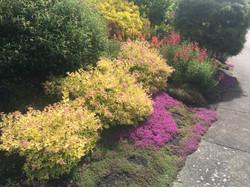Colorful hillside