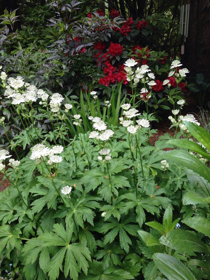 Specialty Woodland Perennials