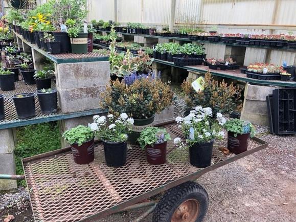 Personal Plant Shopper 1.jpg