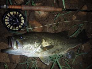 NJ: July's Bounty: Bass & Panfish