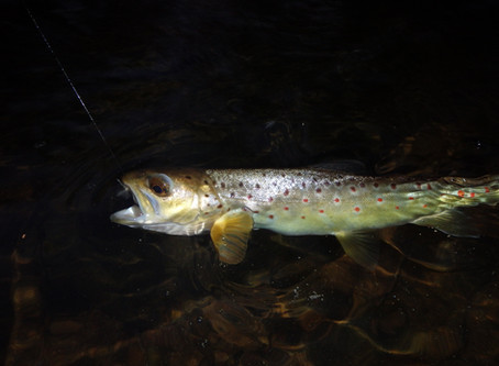 Cooler Weather Means Trout