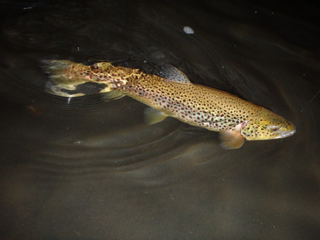 NJ July Fly Fishing