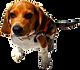 石垣島 幻の島とシュノーケリングツアー 看板犬B作