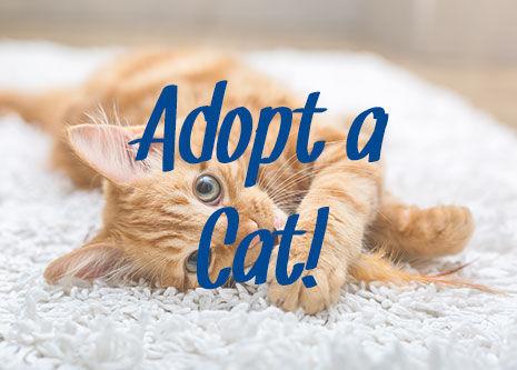 adopt-a-cat-590055188.jpg