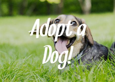 okhumane-adopt-a-dog-533045312.jpg