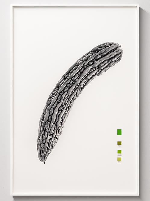 Momordica charantia, 2020