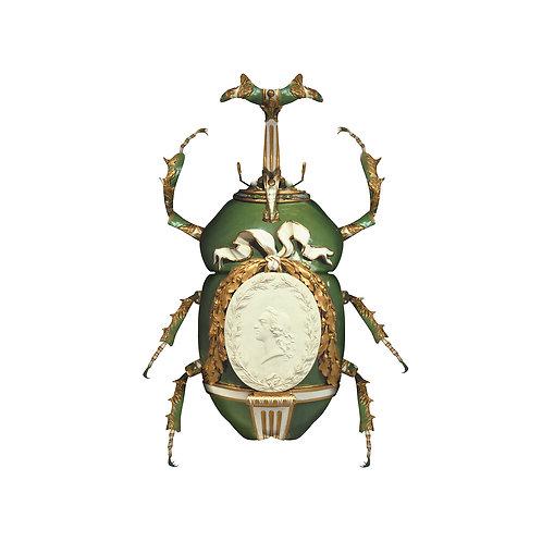 For Shane - 3 beetles