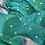 Thumbnail: Aqua Green - Gadwal