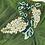 Thumbnail: White flower