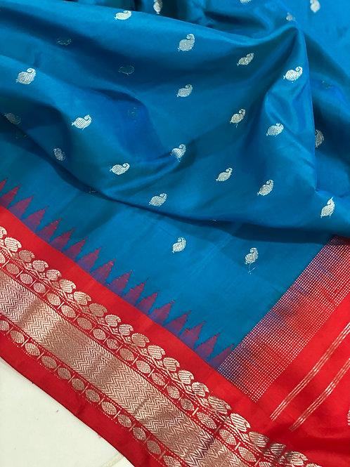 Blue Gadwal