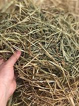 Low Sugar Hay