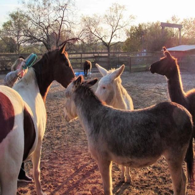 brushing-horses.jpg