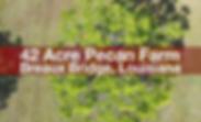 Louisiana Pecan Farm for sale,robert crouchet top commercial real estate agent,breaux bridge land for sale, Lousiana land for sale, NAI lafayette commercial real estate agent