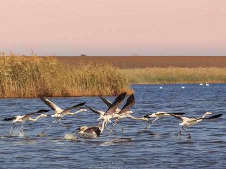 Trupa Flamingo de Romania - cei 7 magnifici.  :) Lacul Rodeanu.