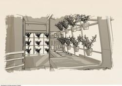 Esquisse - rideaux d'aromates