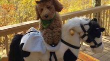 Halloween Dog Photo Contest Winner