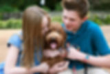 How to prepare for bringing Goldendoodle puppy home