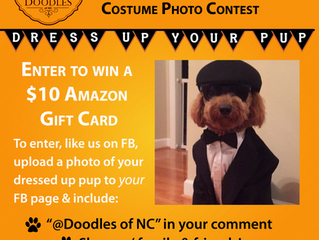 Win a $10 Amazon Gift Card in Pup Halloween Costume Contest