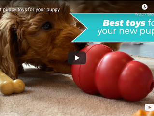 Best Puppy Toys for your Puppy