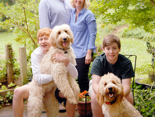 Introducing New 2018 Goldendoodle Puppy Moms