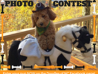 Enter Howl-o-ween Dog Photo Contest